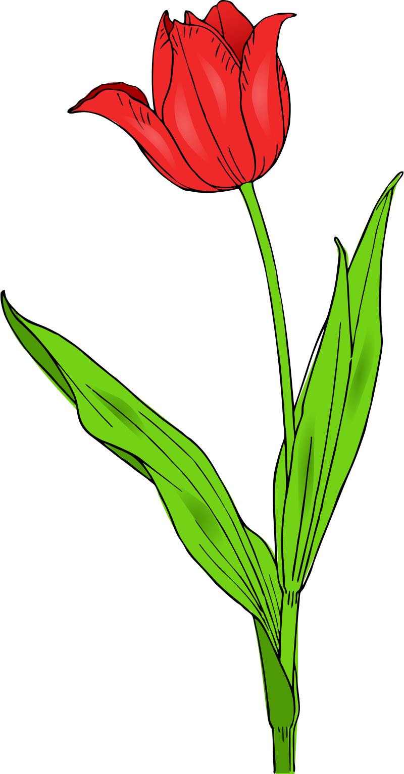 Colored Tulip Spring Flowers Clipart Panda Free Clipart Images