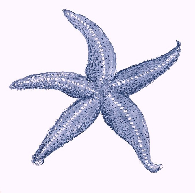 Blue Starfish Clipart | Clipart Panda - Free Clipart Images