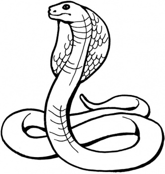 14 king cobra clip art.