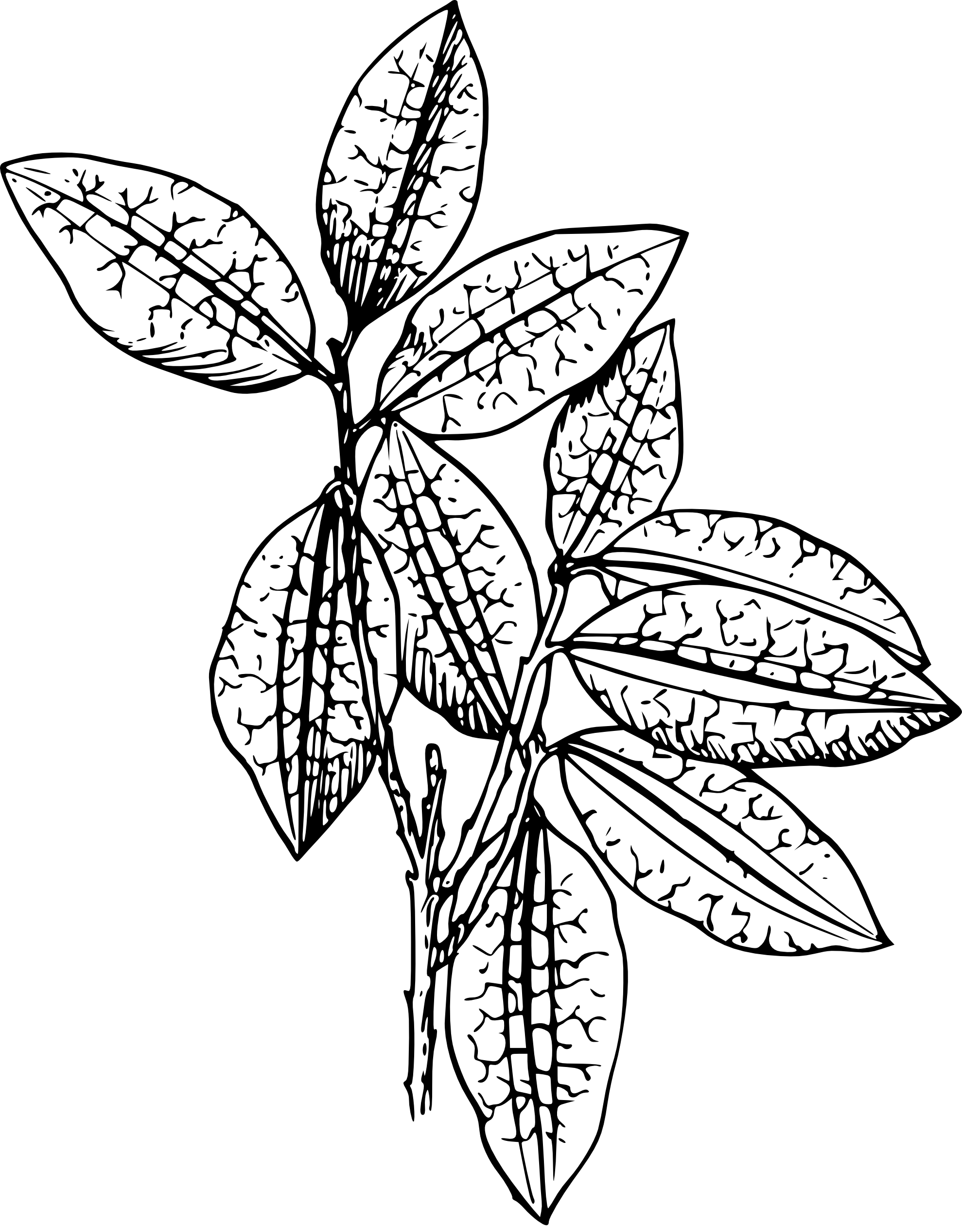 Flower Leaf Line Drawing : Plant clipart black and white panda free