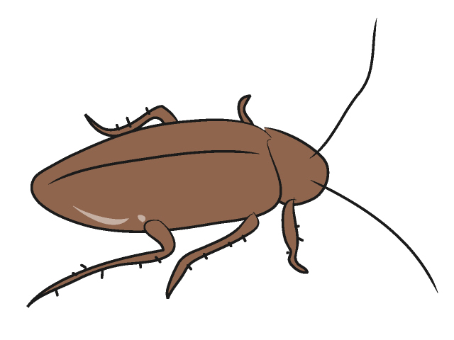 Use these free images for your websites, art projects, reports, and ...: www.clipartpanda.com/categories/cockroach-clip-art-free