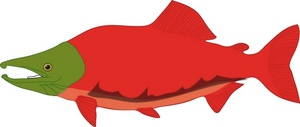 cooked salmon clipart clipart panda free clipart images rh clipartpanda com salmon clip art images jumping salmon clipart