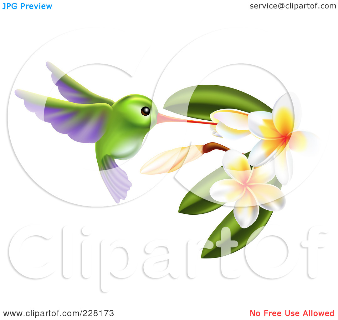 copyright-free-photos-Royalty-Free-RF-Clipart-Illustration-Of-A-Green ...: galleryhip.com/hummingbird-flowers-clip-art.html