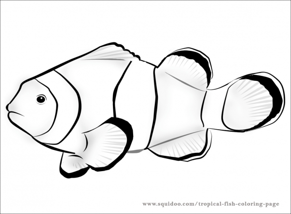 saltwater fish coloring pages - clown fish coloring page clipart panda free clipart images
