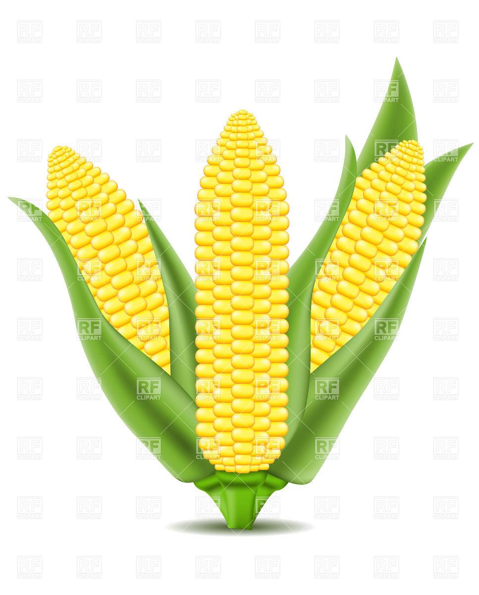 corn clip art free clipart panda free clipart images rh clipartpanda com clip art corn hole game clip art corner