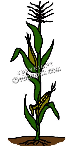 clip art cornstalk color clipart panda free clipart