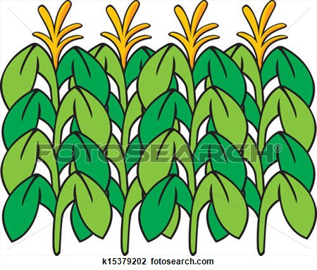 cornfield clipart clipart panda free clipart images rh clipartpanda com corn field clipart black and white Corn Field Drawing