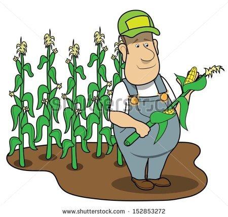 cornfield%20clipart
