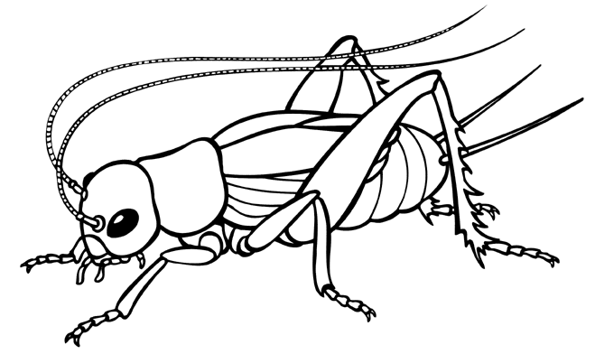 cricket clipart black and white clipart panda free grasshopper clip art free grasshopper clip art for kids
