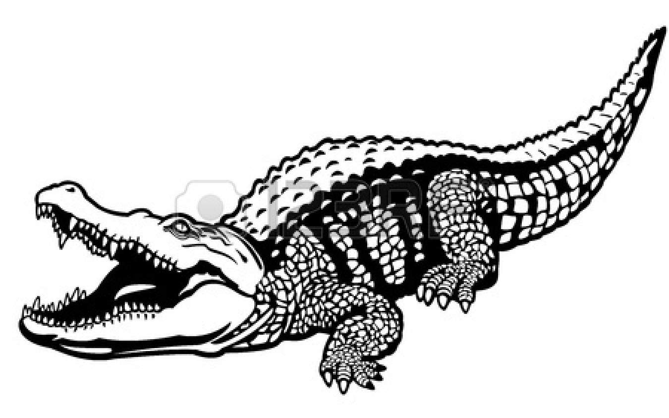 Crocodile Drawing Outline | Clipart Panda - Free Clipart ... - photo#29
