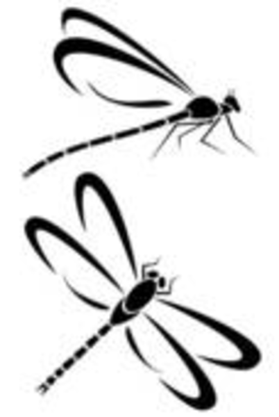 Dragonfly Tattoo Line Drawing : Dragonfly clipart black and white panda free