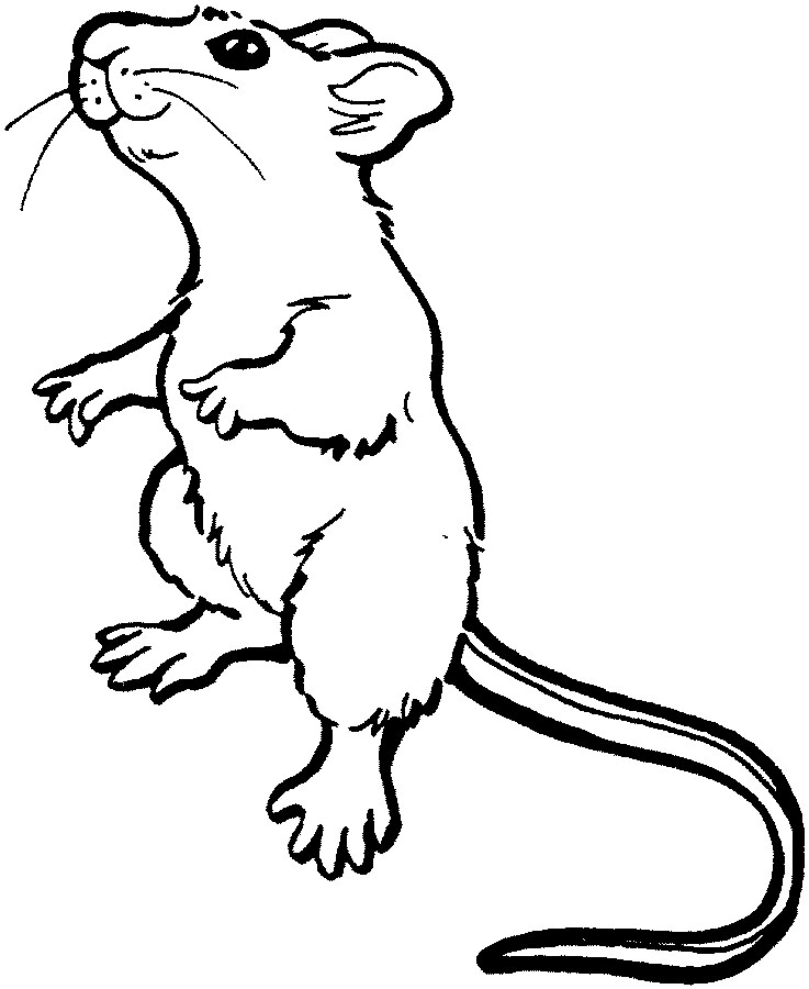 Line Drawing Mouse : Cute mouse drawing clipart panda free images