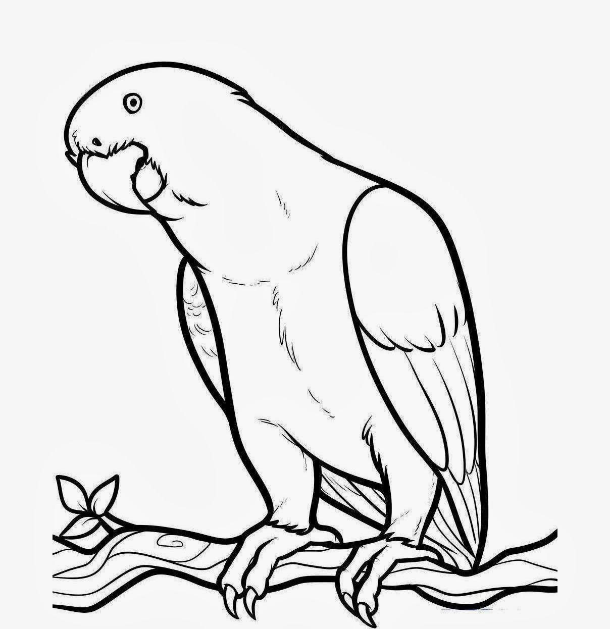 Cute Parrot Drawing | Clipart Panda - Free Clipart Images