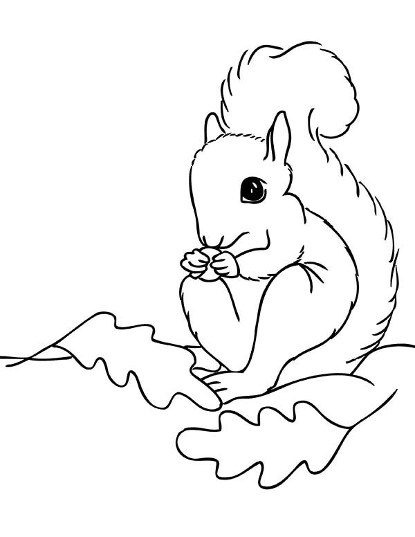 cute cartoon baby squirrel coloring pages coloring pages