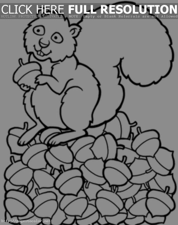cute%20squirrel%20coloring%20page