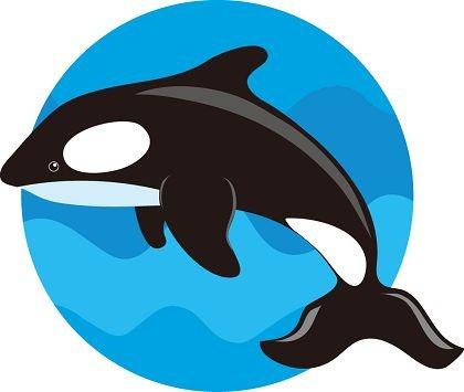 cute whale clip art clipart panda free clipart images clip art wales dragon clip art whale watching