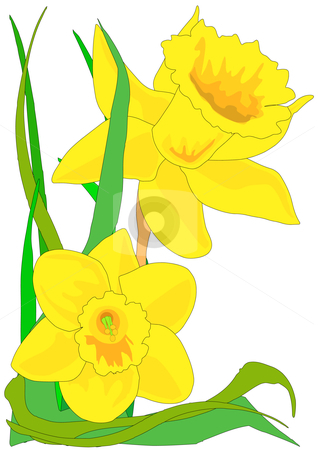 Daffodils stock vector clipart | Clipart Panda - Free Clipart Images