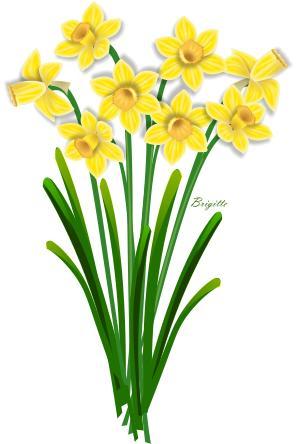 daffodil flower clip art clipart panda free clipart images rh clipartpanda com daffodil flower clipart daffodil clip art images