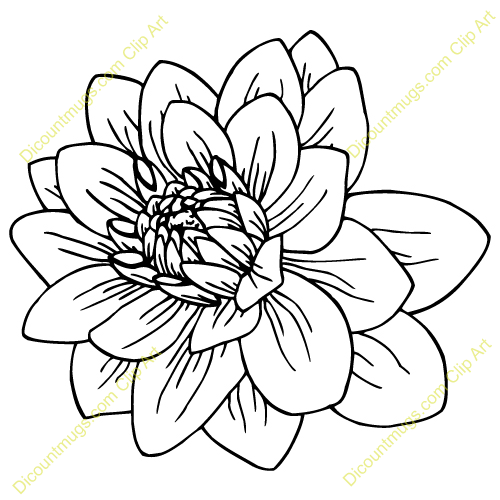 Dahlia Flowers Drawing Dahlia Flower Clip Art