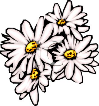 daisy clipart