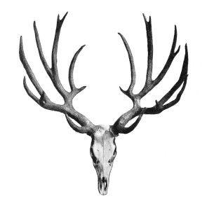 Deer Antlers Clip Art - fedinvestonline