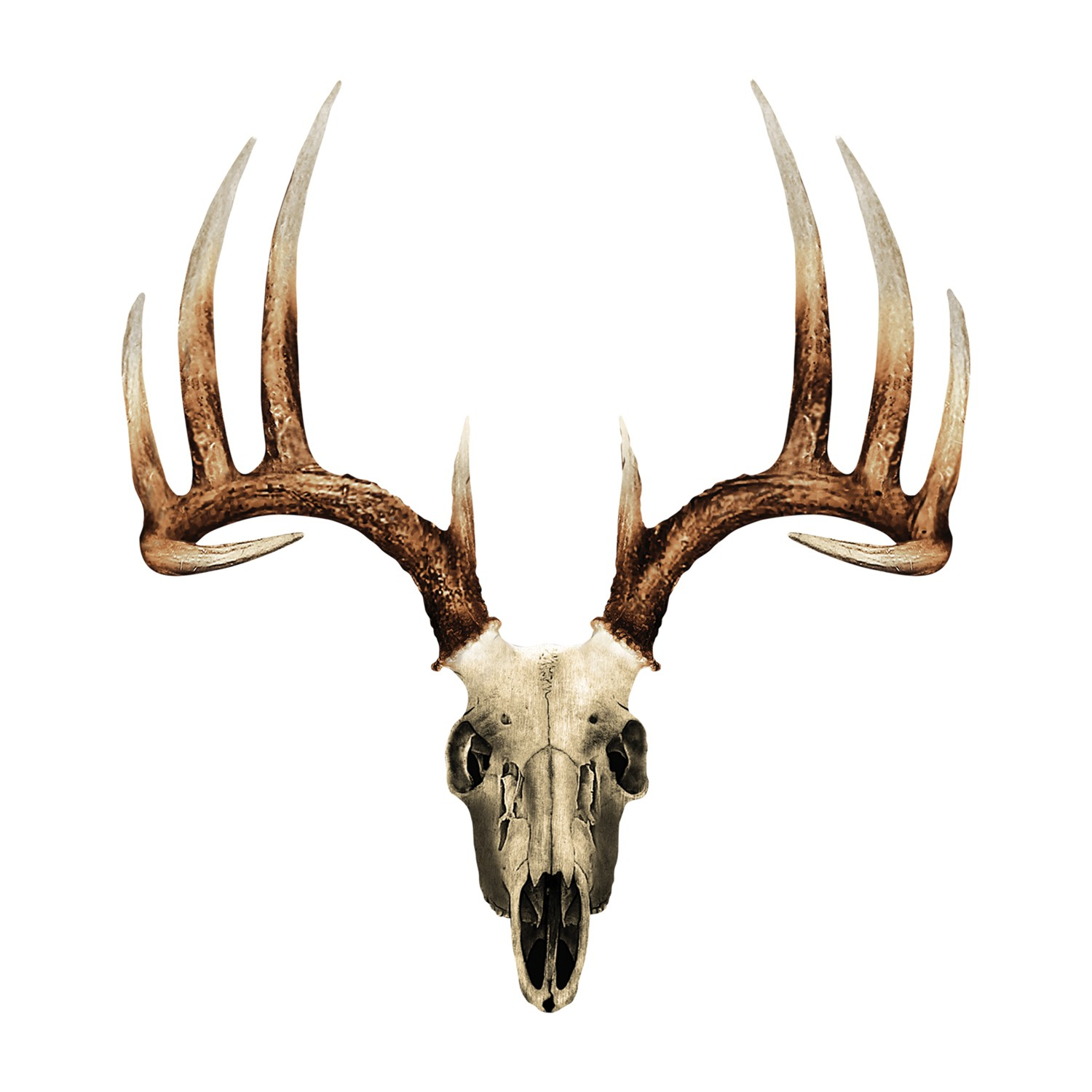 Pics Photos - Whitetail Deer Buck Skull Mule Deer European Mount