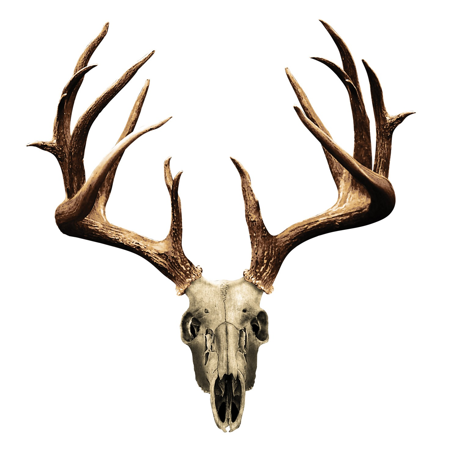 deer%20skull%20decal%20drop%20tine