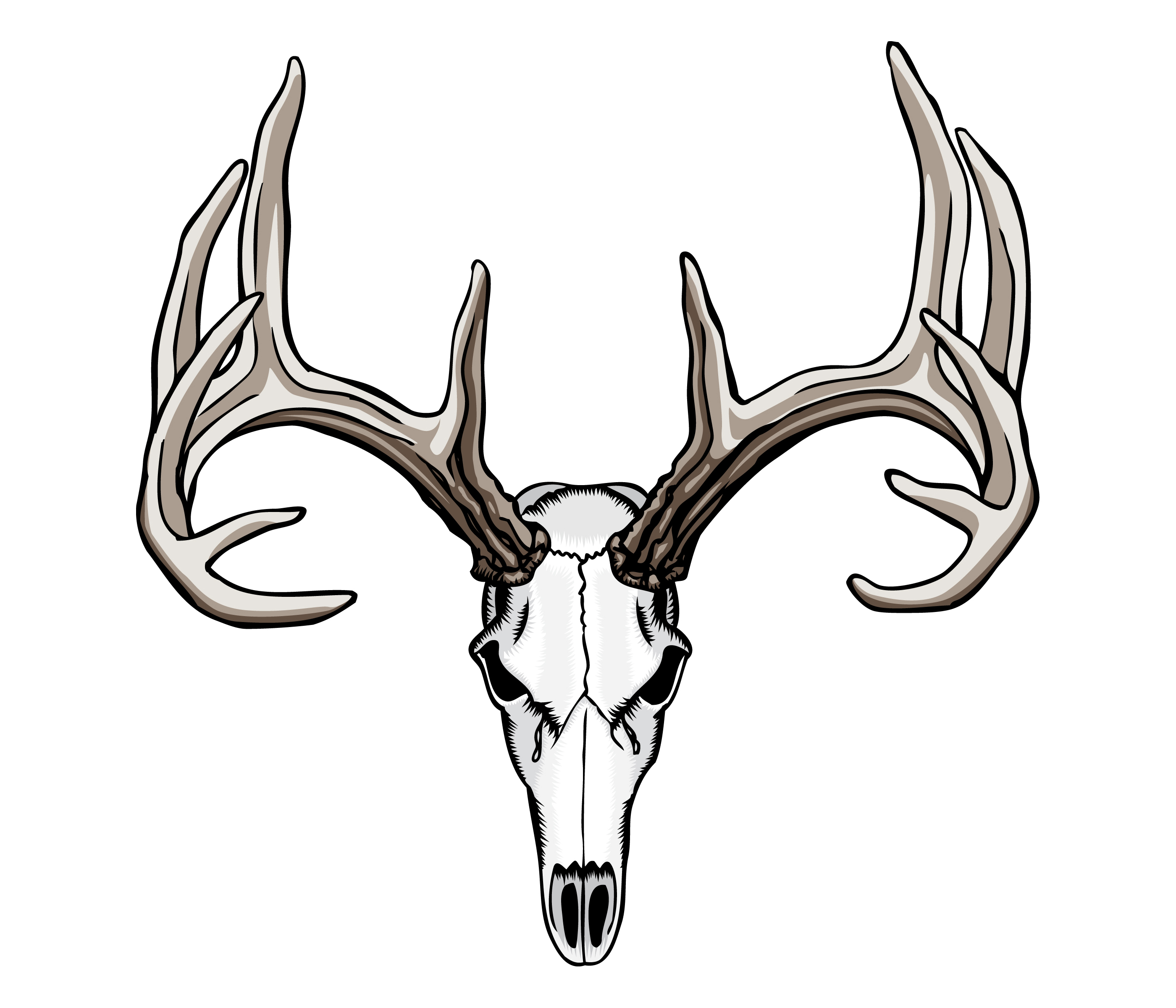 Elk skull drawing - photo#17
