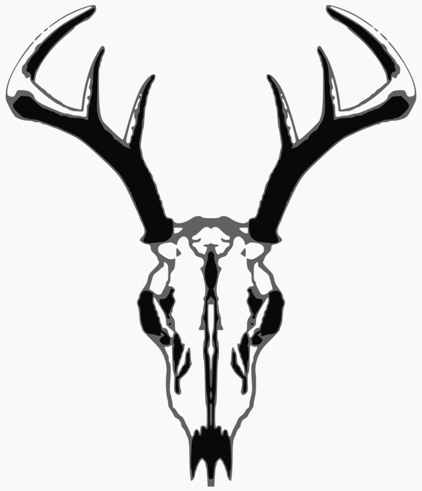 deer%20skull%20drawing