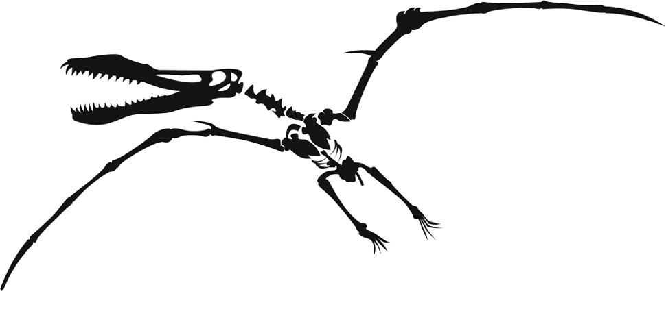 dinosaur bones clipart clipart panda free clipart images rh clipartpanda com Dinosaur Egg Clip Art Dinosaur Fossil Clip Art