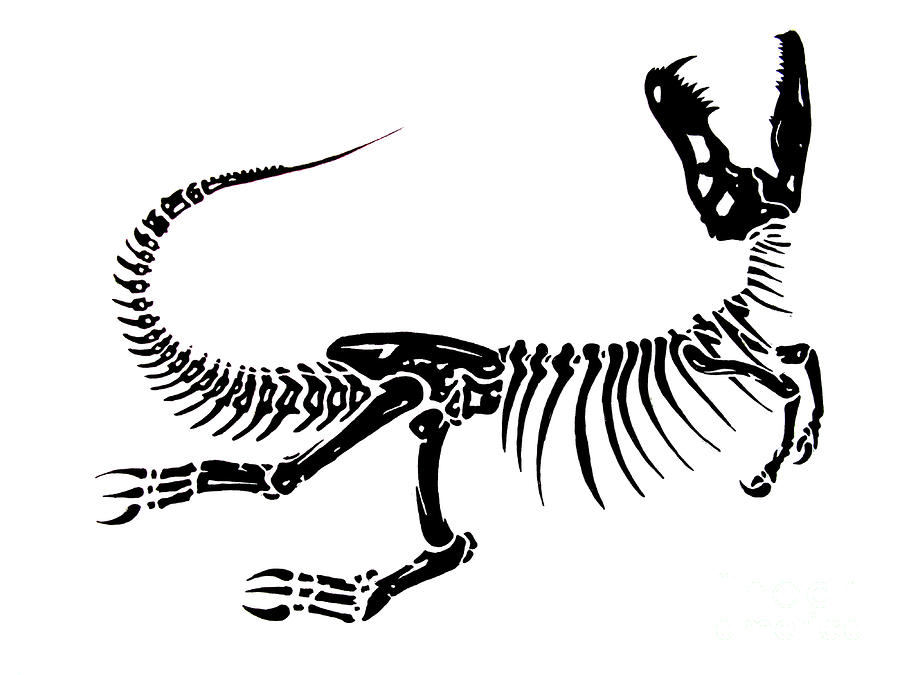 Dinosaurs Fossils Drawings Dinosaur%20bones%20drawing