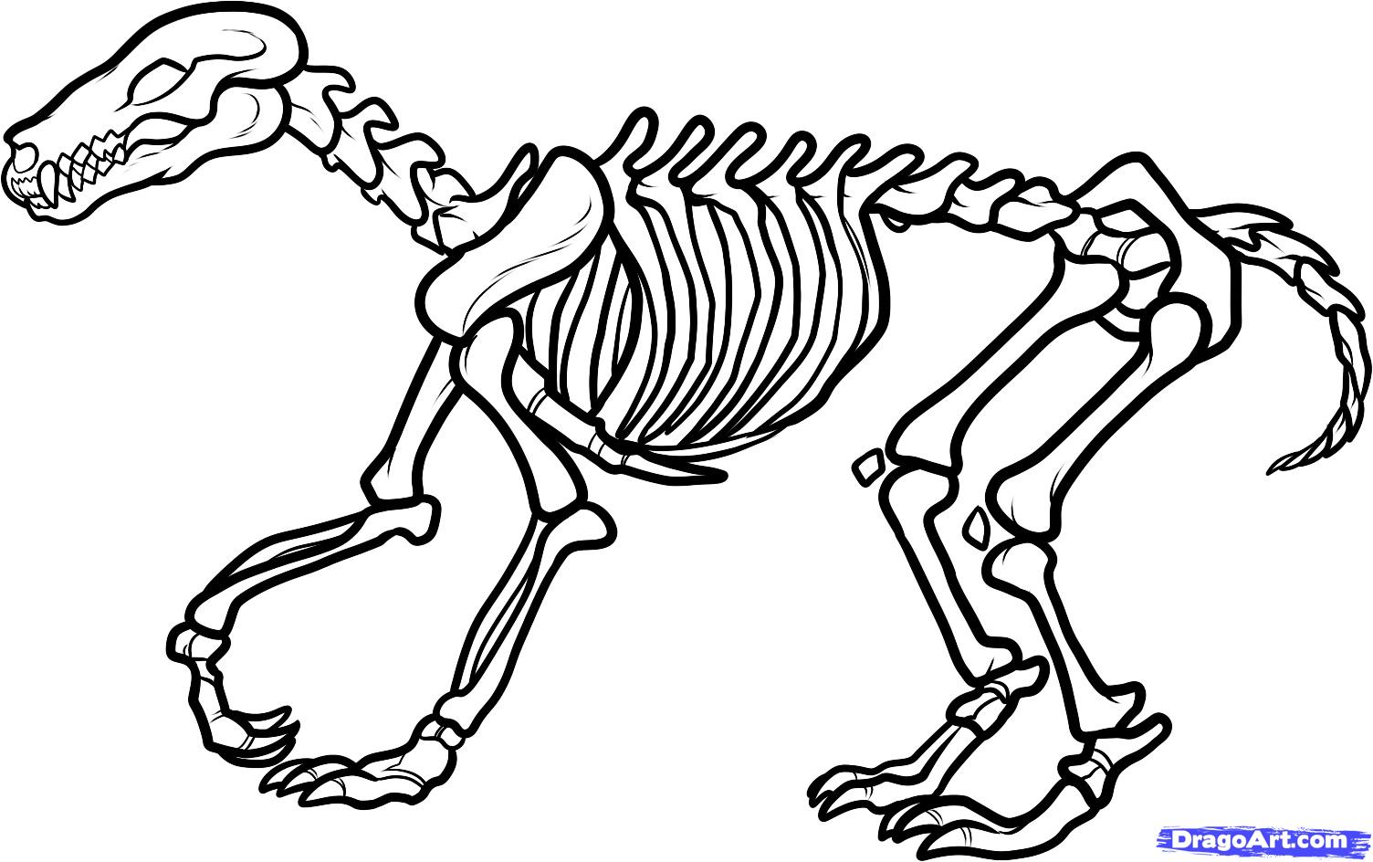 Scary dinosaur coloring pages - Dinosaur 20bones 20drawing