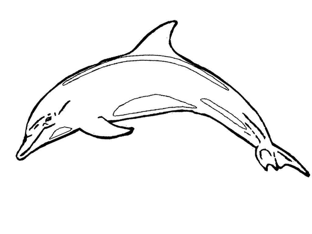 mermaid and dolphin coloring pages - photo#30