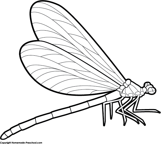 Line Drawing Dragonfly : Dragonfly clipart black and white panda free