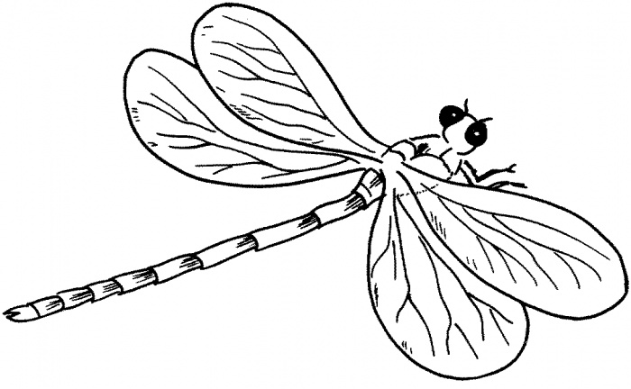 Dragonfly Tattoo Line Drawing : Dragonfly outline clipart panda free