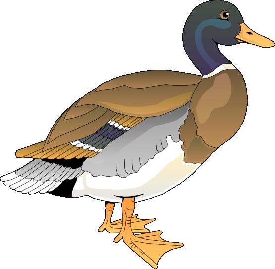duck%20clipart