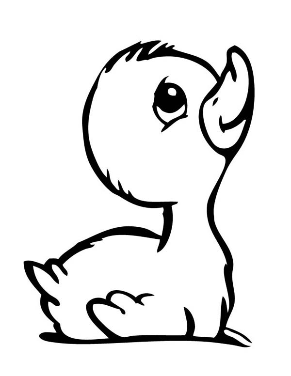 cute baby duck coloring pages - photo#8
