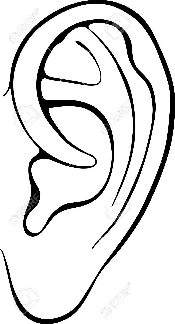 Line Drawing Ear : Ear clipart panda free images