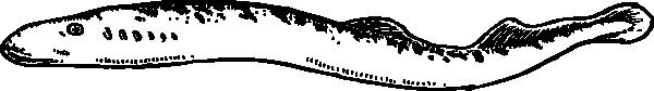 Eel Clipart
