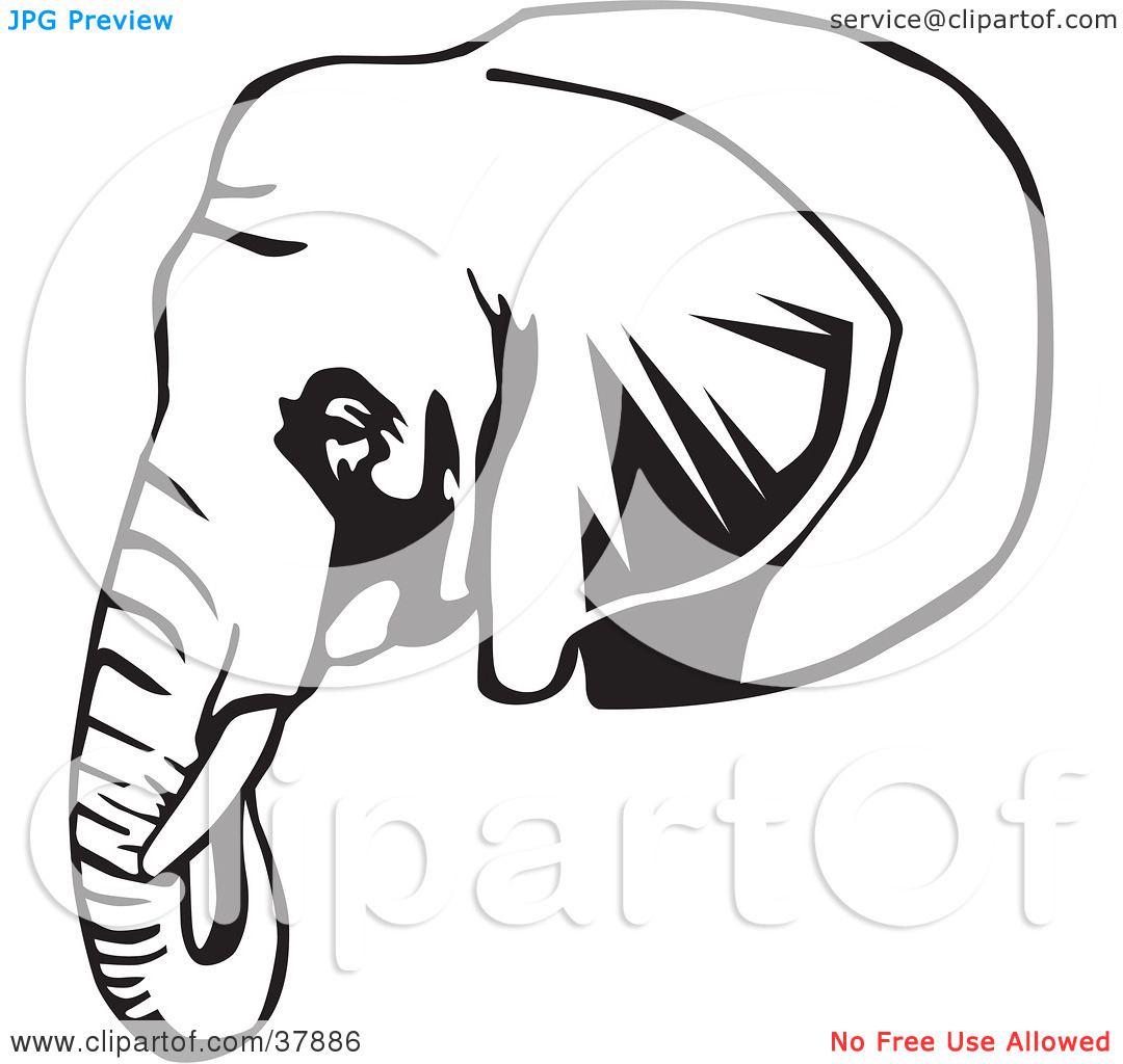 elephant head outline clipart panda free clipart images