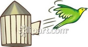 how to get a bird out of its cage