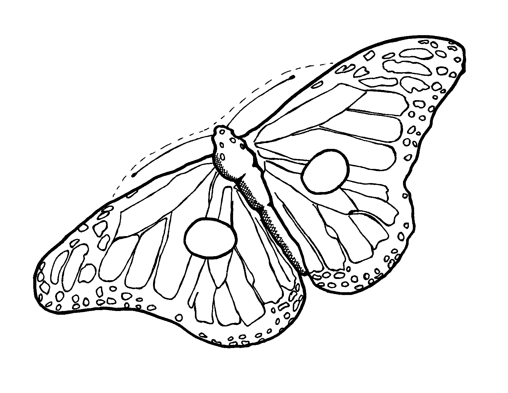 image regarding Free Printable Fairy Wings named Fairy Wings Template Clipart Panda - Totally free Clipart Pics