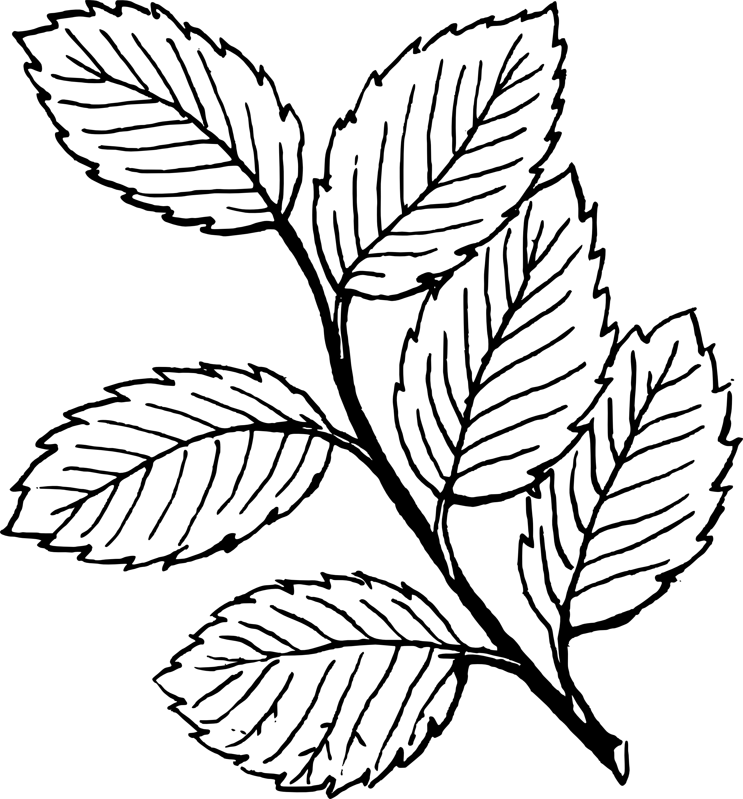 Fall Leaf Clipart Black And White | Clipart Panda - Free ...