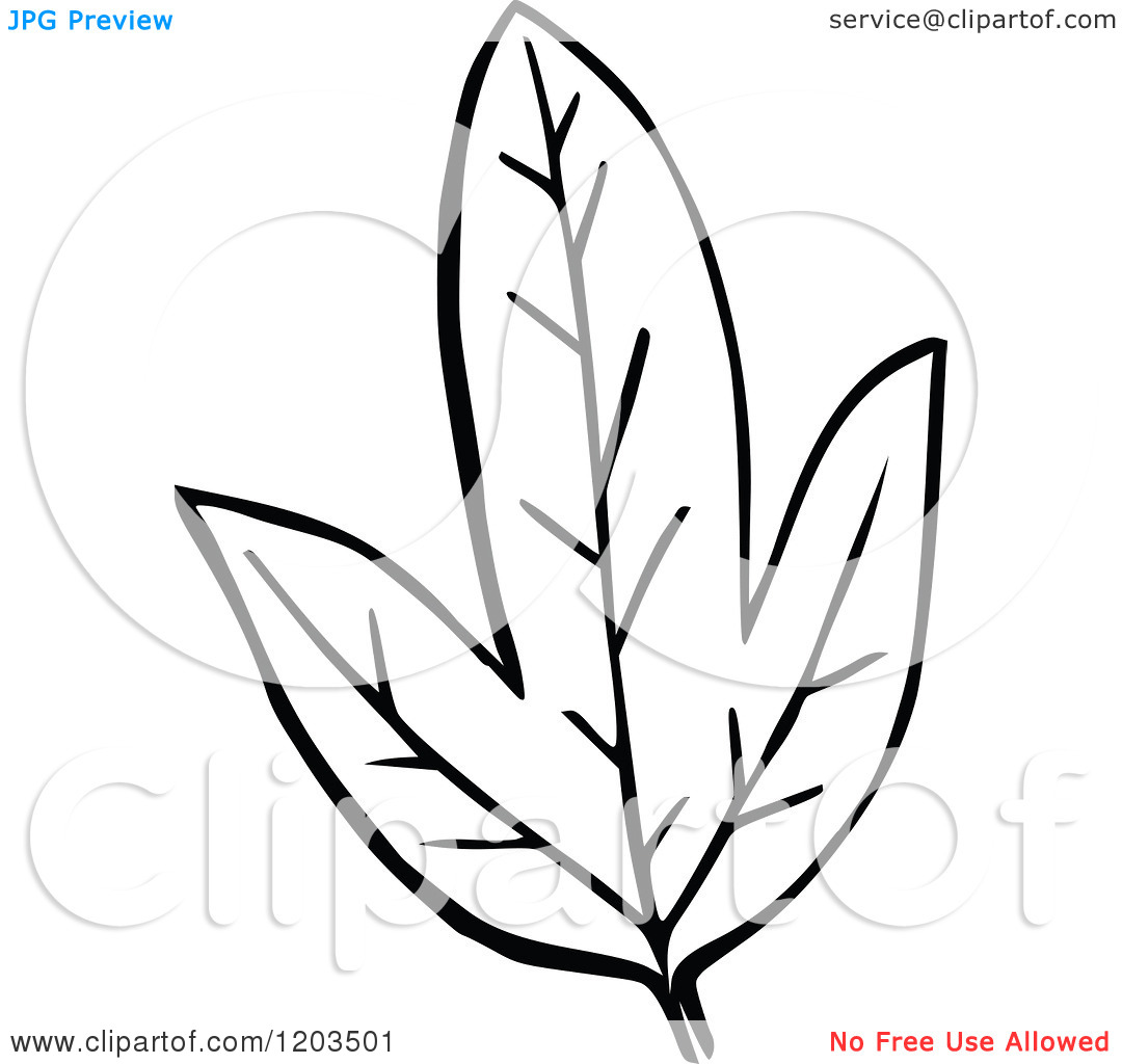 Fall Leaves Clipart Black And White Border | Clipart Panda ...