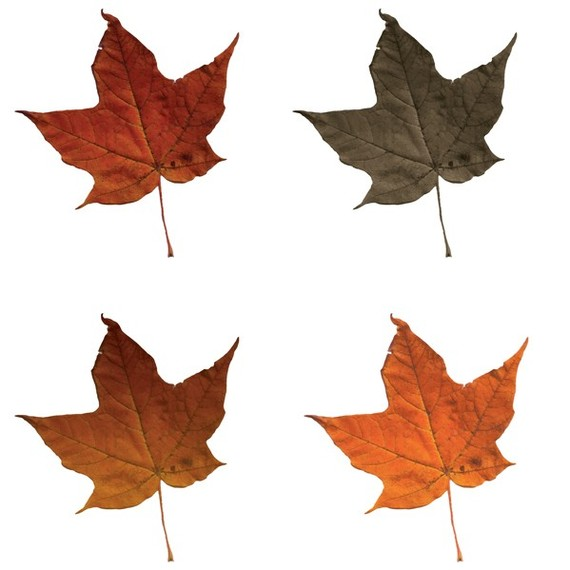 Fall leaves clip art free clipart panda free clipart - Leaves paintings and drawings ...