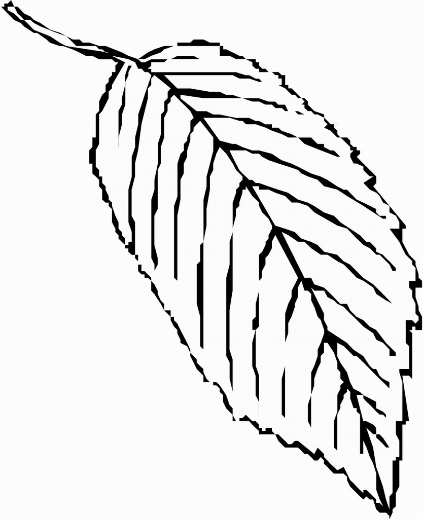 coloring pages seeds and plants - photo #45