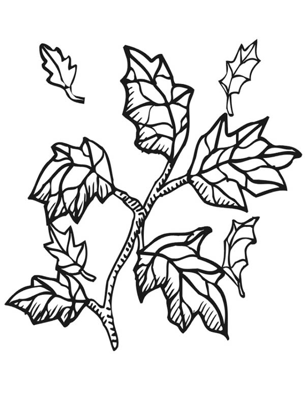 trees and indian coloring pages - photo#11