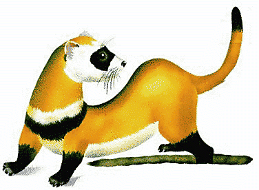 ferret clip art images clipart panda free clipart images rh clipartpanda com  ferret clipart black and white