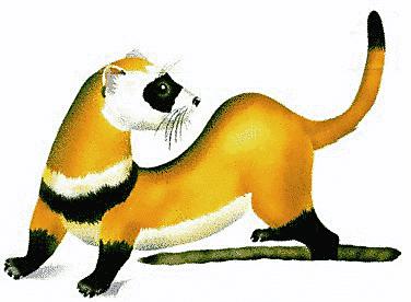 ferret clip art images clipart panda free clipart images rh clipartpanda com ferret clipart black and white ferret clip art images