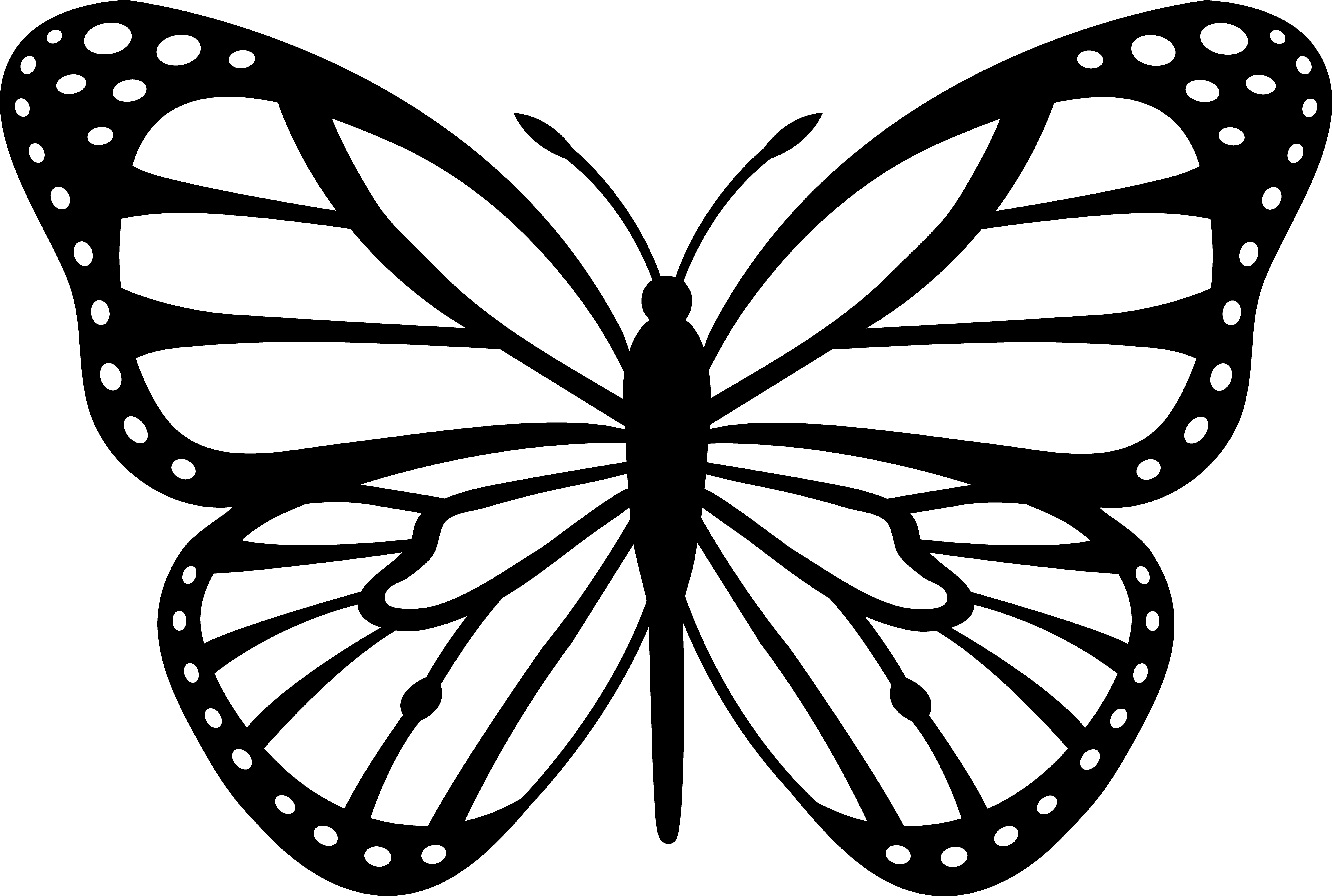 Jpg To Line Drawing : Butterfly outline clipart panda free
